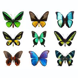 Sellos      de la categoría Mariposas  '