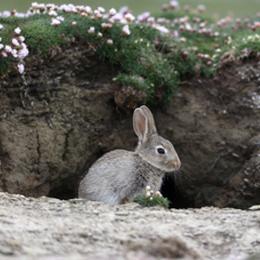 Sellos      de la categoría Conejos Y Liebres  '