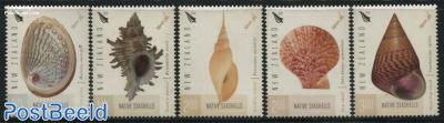 Native Seashells 5v