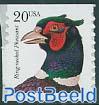Ring necked pheasant 1v