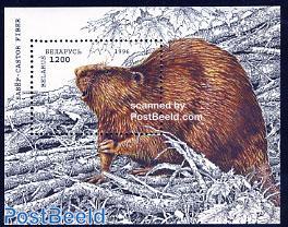 Beaver s/s